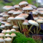 Mushrooms Can Eat Plastic, Petroleum and CO2