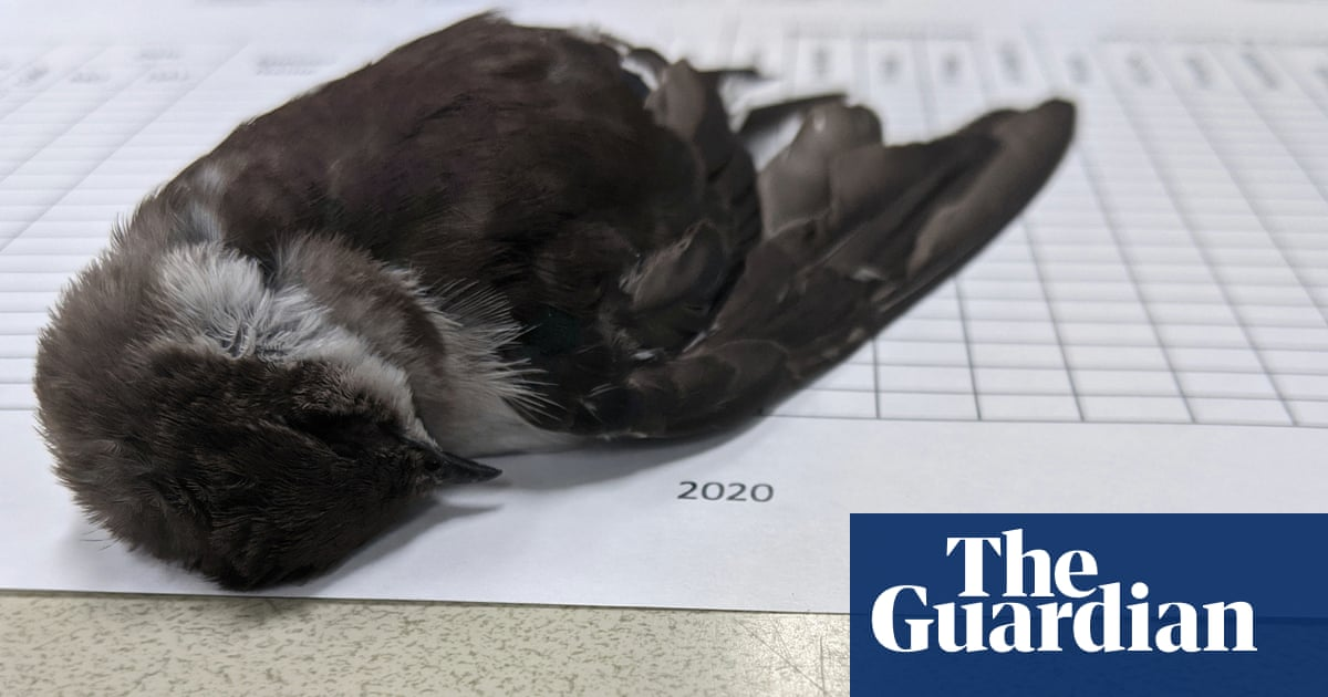 Mass die-off of birds in south-western US 'caused by starvation'