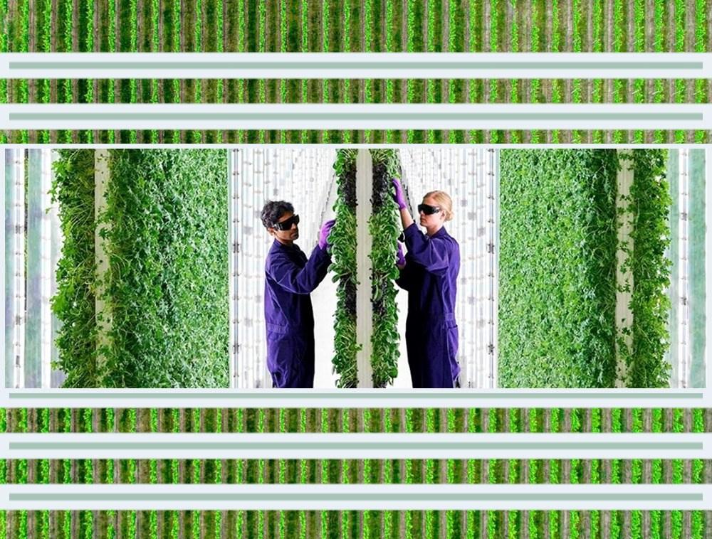 2-Acre Vertical Farm Run by AI and Robots Out-Produces 720-Acre Flat Farm