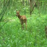 Monks Wood Wilderness: 60 years ago, scientists let a farm field rewild